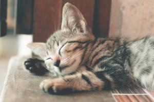 girl-talk-leadership-blog-sleep-cat